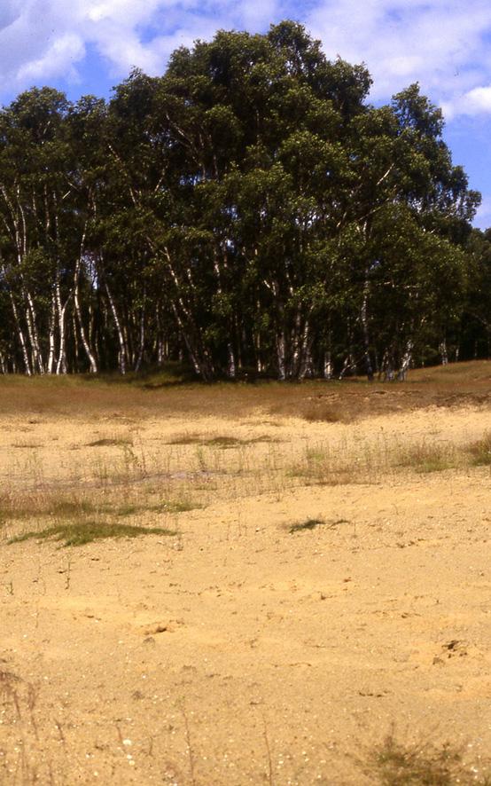 Wangford dune