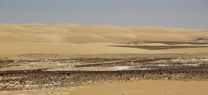 W desert