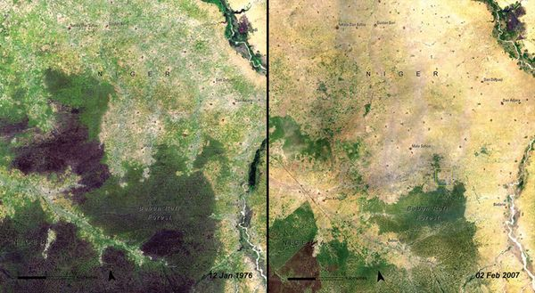 Deforestation_Niger
