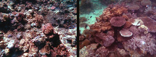 MW reefs