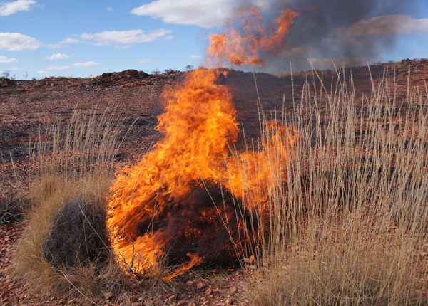 Burn spinifex