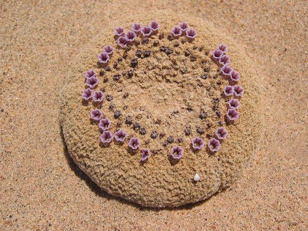 Sand food 1