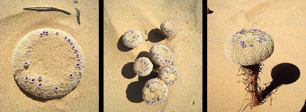 Sand food 2